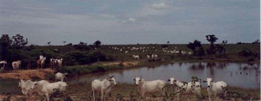 Venda Fazenda 1575 Hectares Em Campinápolis-mt - 6000