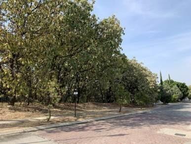Terreno Sobre Paseo Del Agua, Palomar Segunda Sección