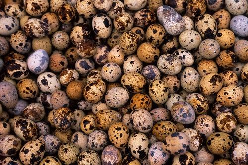 Imagen 1 de 2 de Huevos De Codorniz Coturnixsa Al Por Mayor Y Menor