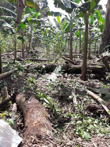 Terreno En Venta Apto Para La Agricultura Y Ganadería