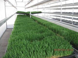 Estantes Y Charolas Para La Producción De Forraje Verde