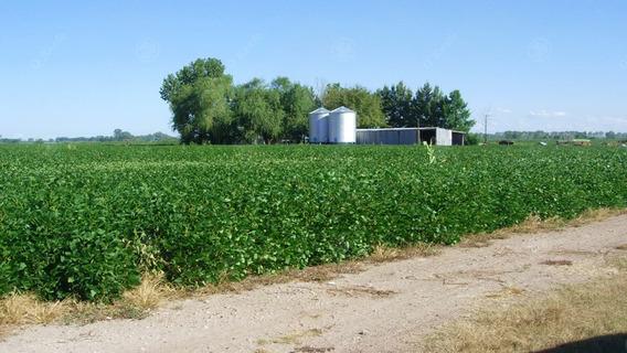 Excelente Campo Agrícola De 79 Has Con Buenas Instalaciones