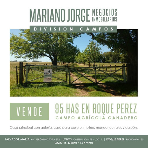 Imagen 1 de 11 de Campo 95 Has Ganadero - Roque Perez