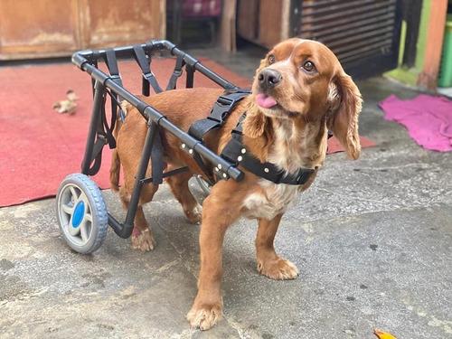 Sillas De Ruedas Para Perro Discapacitados Peru (grande)
