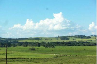 Fazenda Com Criação De Búfalos Oportunidade De Investimento Região De Santana Do Itararé Pr - 1178
