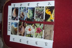 Ctna0005 - 80 Cartões Telefônicos Avulsos Para A Sua Coleção