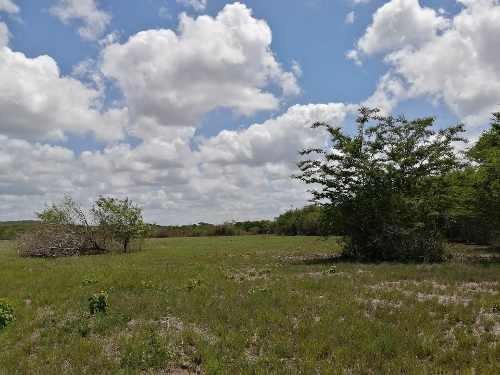 Terreno En Venta En La Comunidad De Corral, Municipio De Tzucabcab