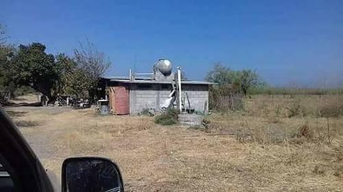Gran Venta De Rancho De 7 Hectarias Con 30 Cabezas De Ganado Indo Brazil Y Sebu