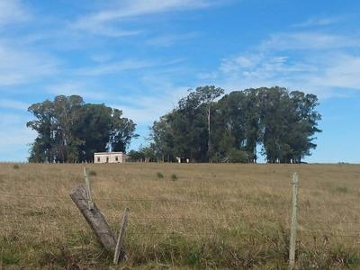 Campo Agricola Ganadero