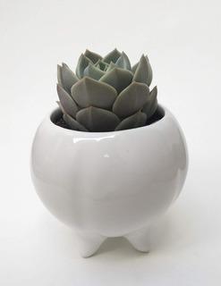 Maceta De Ceramica Esmaltada Mini Gajos - Ruge