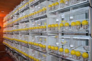 Jaula Cría De 60 Cm. Epoxi Blanco 8 Vasos En Mundo Mascotas