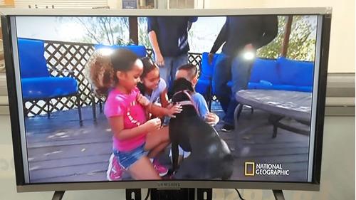 Imagen 1 de 4 de Tv Samsung 32 Pulgadas Semicurvo