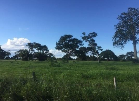 Fazenda Para Venda Em Pontes E Lacerda, Fazenda Zona Rural Pontes E Lacerda/mt R$ 140.000.000 - 35880