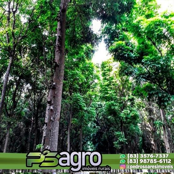 Vendo Sítio Contendo 12hec De Mogno Amazônico - Si0005