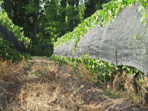 Vendo Viñas San Rafael Mendoza