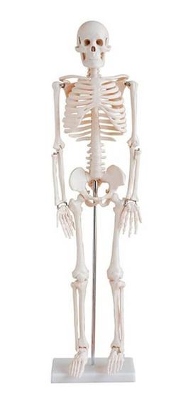 Esqueleto Anatomia Humana Medicina Do Corpo 85cm
