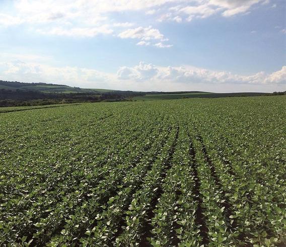 Fazenda Londrina 100,0 Alqueires ( 242,0 Hectares)