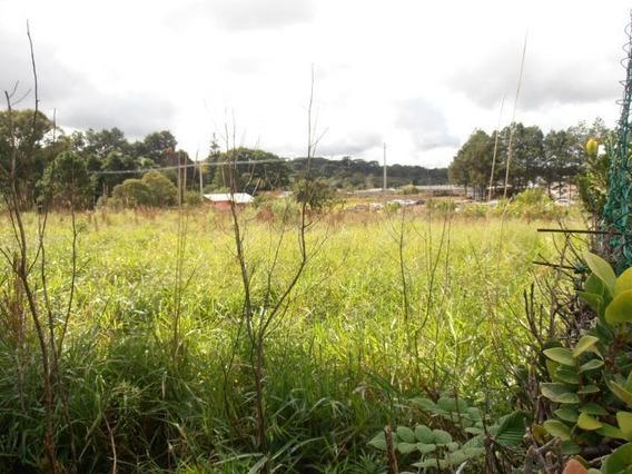 Terreno Para Venda Em São José Dos Pinhais, Borda Do Campo - Te-057_2-490329