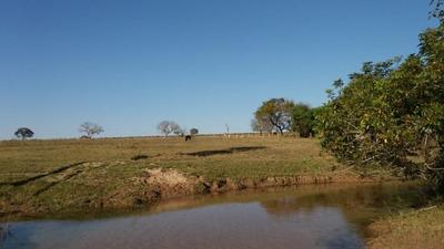 Fazenda A Venda Em Rio Negro - Ms - 1017