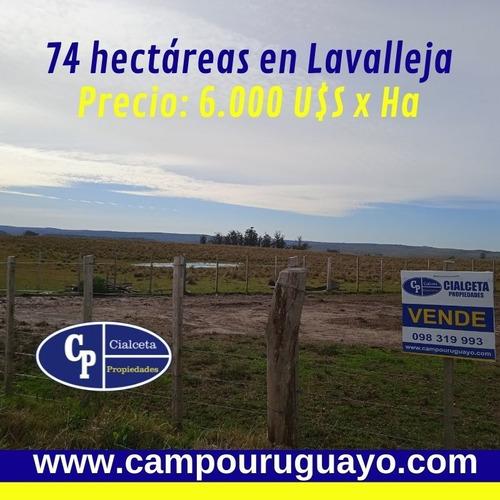 74 Hectáreas En Lavalleja,varias Vertientes