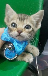 Collar Placa Gato Mascota Perro Identificacion Enviogratis