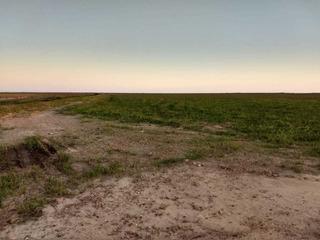 Fazenda Entre Uruguaiana E Itaqui