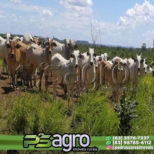 Imagem 1 de 1 de Fazenda Com 1.000 Alqueries  Por R$ 23.000.000  - Barra Do Ouro/to - Fa0193