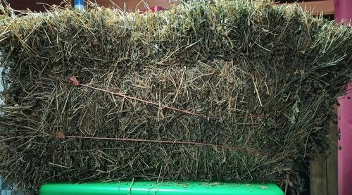 Imagen 1 de 2 de Fardos De Alfalfa Fresca