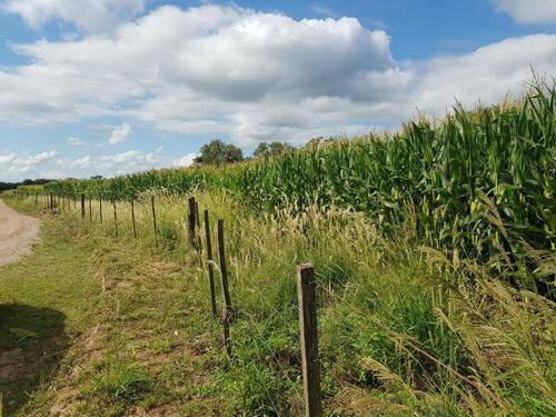 Campo En Venta En Rio Cuarto Agricultura