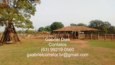 Fazenda De 514 Alqueires Go A 260km De Palmas Tocantins