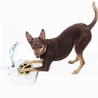 Fuente De Agua De Perro - Perro Al Aire Libre De Paso De Agu