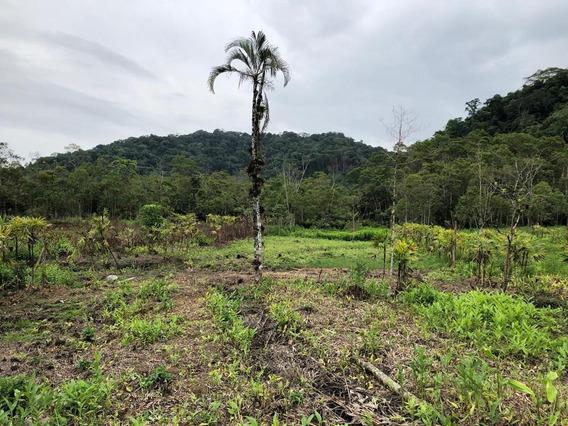 Terrenos Para Chácaras Em Mongaguá Entrada De R$ 5 Mil