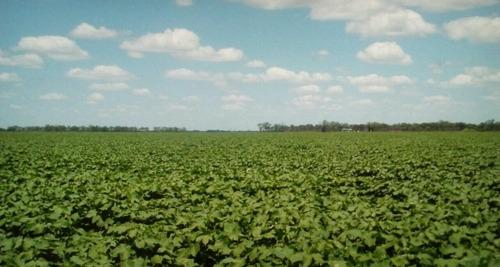 Vendo Establecimiento Agrícola-ganadero  811 Ha San Bernardo