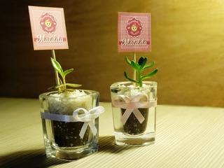 Recuerdos Baby Shower Matrimonios Cactus Suculentas Regalos