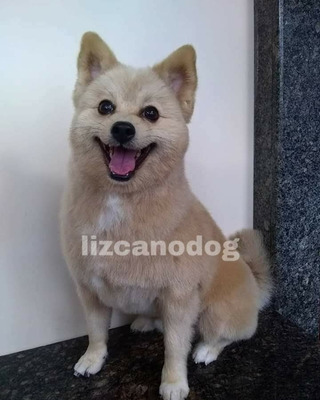 Peluqueria Canina A Domicilio Lizcano_dog