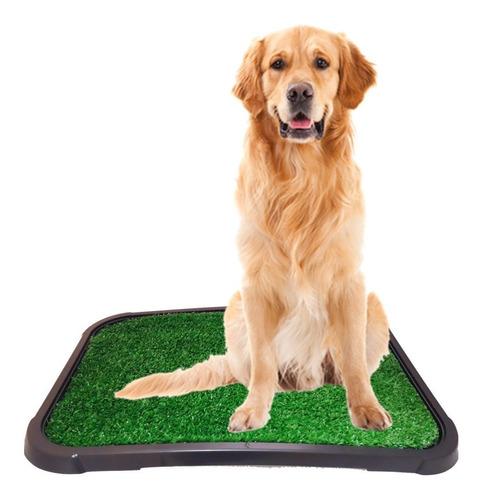 Sanitário Canino Banheiro Grande Para Cães Com Tapete Grama