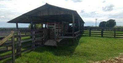 Fazenda Para Venda Em São Gabriel Do Oeste, Zona Rural - Ms3002