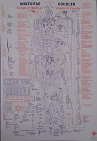 Anatomia Oculta - Poster- Nova Edição-março/18