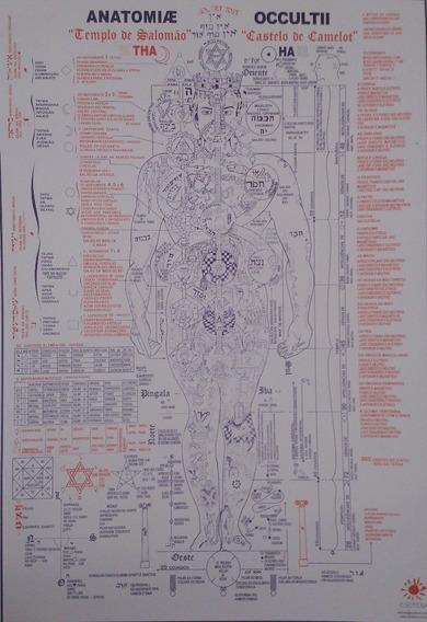 Anatomia Oculta - Poster- Edição De Boa Qualidade!