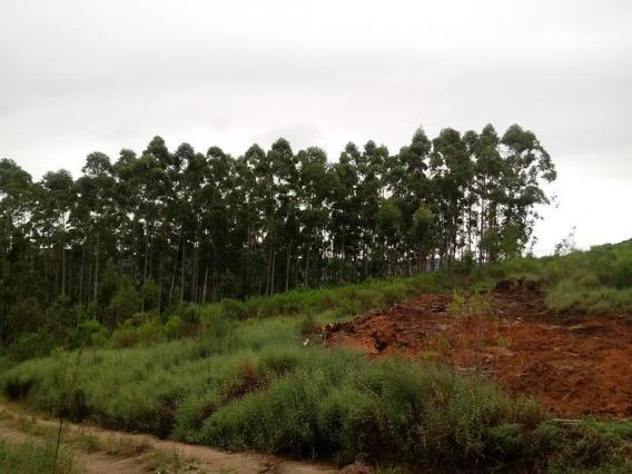 Área Rural Para Venda, Linha Dr. Flores -mariana Pimentel - 1178se