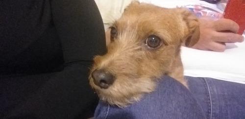 Imagem 1 de 1 de Cachorro