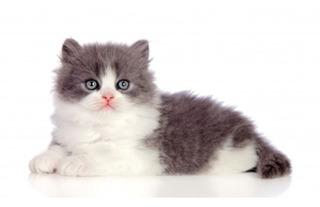 Hermosos Bebés Persas