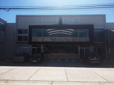 Local En Renta Plaza Ciprés