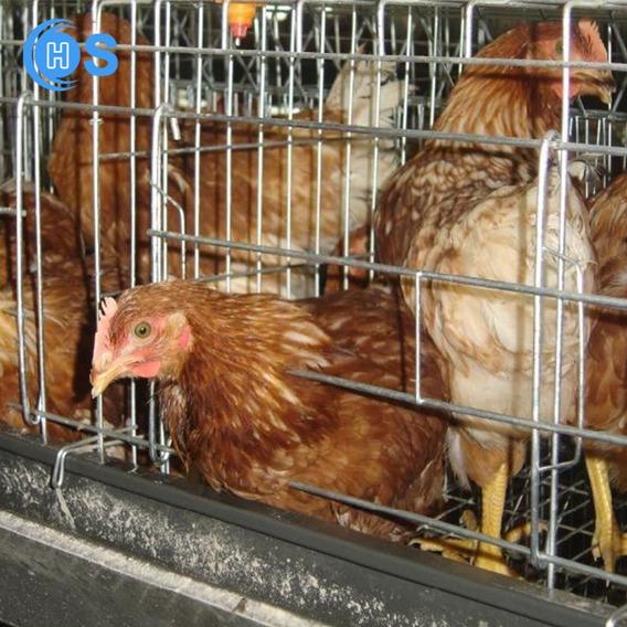 Conjunto De Gaiola Para Galinha De Postura - Galpao 256 Aves