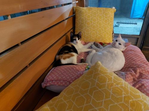 Imagem 1 de 1 de Hotel De Pets