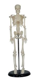 Esqueleto Humano De 45 Cm C/ Suporte - Anatômico