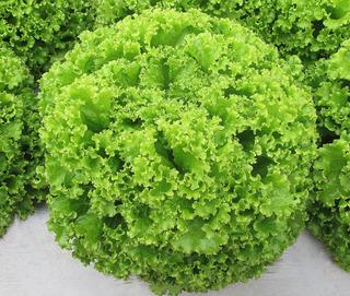 200 Sementes De Alface Mimosa Verde Crioula Salad Bowl Usa