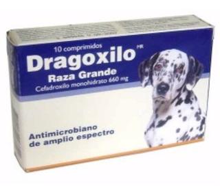 Dragoxilo Cefadroxilo Antibiotico Perro Grande Antofagasta