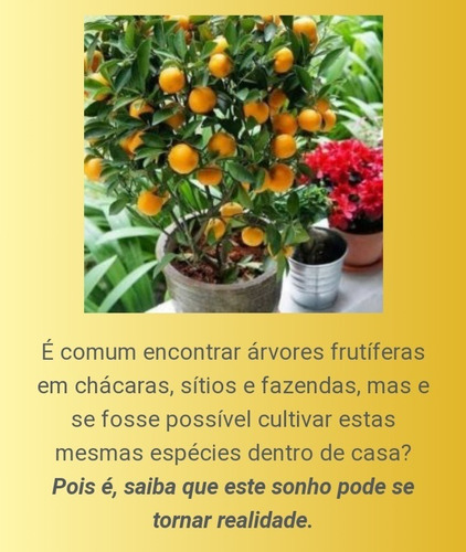 Imagem 1 de 4 de Video Aulas De Cultivo De Arvores Frutíferas Em Vasos