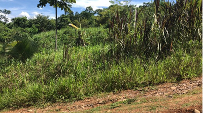 Vendo O Cambio Lote Monteverde Siquirres 7200 Mtrs